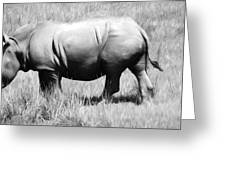 Rhino In The Grasses Greeting Card