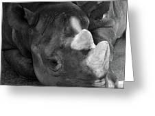 Rhino Nap Greeting Card