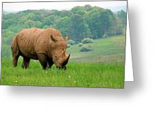 Rhino On The Hilltop Greeting Card