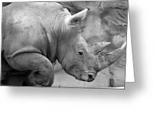 Rhino Profile Greeting Card