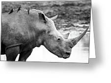 Rhino With Passengers Greeting Card