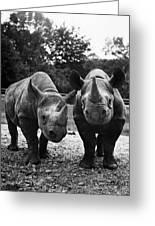 Rhinoceroses Greeting Card