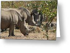 Rhinos,  Zambia Greeting Card