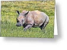 Rhinosceros Greeting Card
