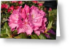 Rhodendrum Greeting Card