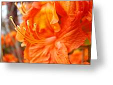 Rhodies Art Prints Orange Rhododendron Flowers Baslee Troutman Greeting Card