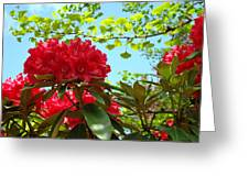 Rhodies Art Prints Red Rhododendron Floral Garden Landscape Baslee Greeting Card