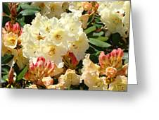 Rhodies Creamy Yellow Orange 3 Rhododendrums Gardens Art Baslee Troutman Greeting Card