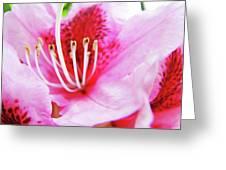 Rhodies Flower Macro Pink Rhododendron Baslee Troutman Greeting Card