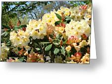 Rhodies Flowers Art Yellow Orange Rhododendrons Garden Greeting Card