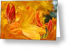 Rhodies Orange Yellow Rhododendrons Art Prints Canvas Baslee Troutman Greeting Card
