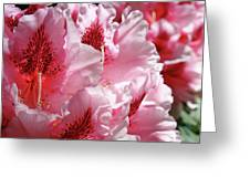 Rhodies Pink Fine Art Photography Rhododendrons Baslee Troutman Greeting Card