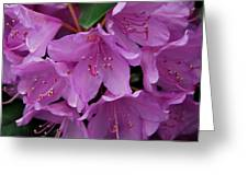 Rhododendren II Greeting Card