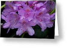 Rhododendren Greeting Card