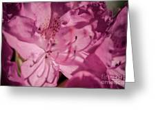 Rhododendron-close Up Greeting Card
