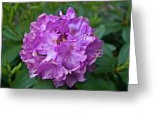 Rhododendron Elegance Greeting Card