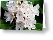 Rhododendron Family Of Flowers Greeting Card