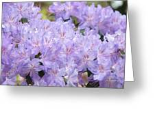 Rhododendron Floral Flowers Lavender Purple Prints Baslee Greeting Card