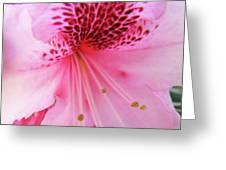 Rhododendron Flower Macro Pink Rhodies Baslee Troutman Greeting Card