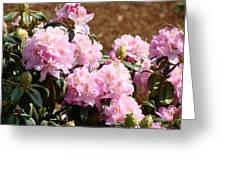 Rhododendron Garden Art Print Pink Rhodies Flowers Baslee Troutman Greeting Card