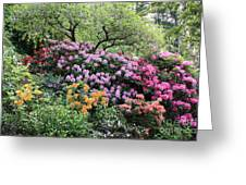 Rhododendron Hill Greeting Card