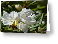 Rhododendron I Greeting Card