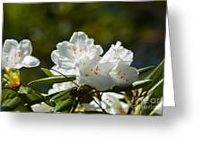 Rhododendron II Greeting Card