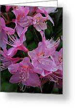 Rhododendron In The Pink Greeting Card