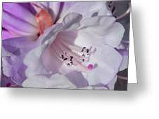 Rhododendron In White And Magenta Greeting Card