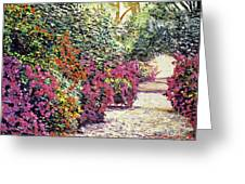 Rhododendron Pathway Exeter Gardnes Greeting Card by David Lloyd Glover