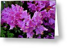 Rhododendron Pink Greeting Card