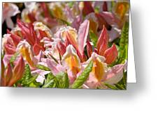 Rhododendrons Floral Art Prints Canvas Pink Orange Rhodies Baslee Troutman Greeting Card