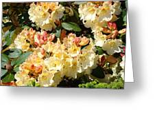 Rhododendrons Garden Art Prints Creamy Yellow Orange Rhodies Baslee Greeting Card