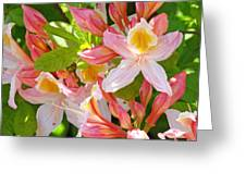 Rhododendrons Garden Floral Art Print Pink Rhodies Greeting Card