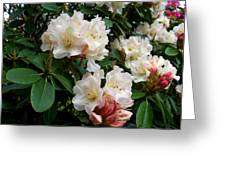 Rhododendrons II Greeting Card