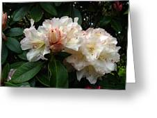 Rhododendrons IIi Greeting Card