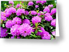 Rhododendrons In Bloom Greeting Card