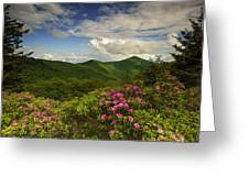 Rhododendrons On The Blue Ridge Parkway Greeting Card