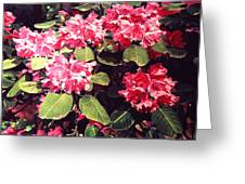 Rhododendrons Rothschild Greeting Card