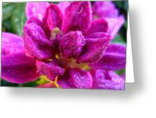 Rhododendrum Greeting Card