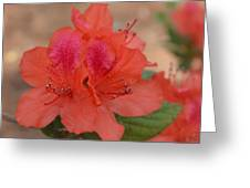 Rhododendrum Oldhamii Greeting Card