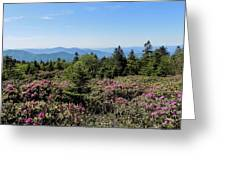 Rhododendron On Roan Mountain Greeting Card