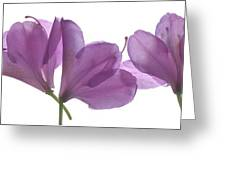 Rhody Ballet-pink Greeting Card
