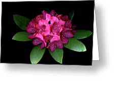 Rhody Queen - Red Greeting Card