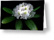 Rhody Queen - White Greeting Card