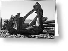 Rialto Beach Cake Rock Driftwood Greeting Card