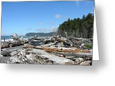 Rialto Beach Washington  Greeting Card