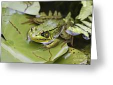 Ribbet In The Pond Greeting Card