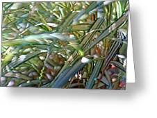 Ribbon Grass 3 Greeting Card