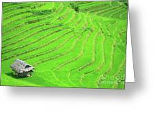 Rice Field Terraces Greeting Card